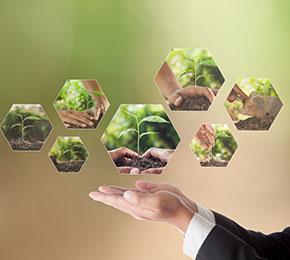 Constituição e Meio Ambiente