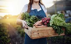 Gestão de Serviços de Nutrição e Dietética