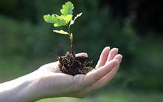 Instrumentos de tutela ambiental